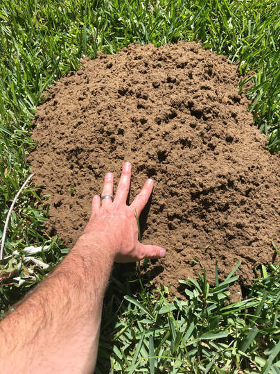 Gopher, pocket gopher, mound, lawn care